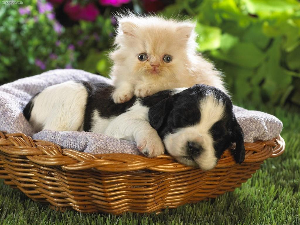 Preciosas-fotos-de-perros-y-gatos-juntos